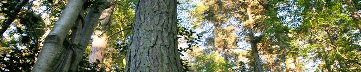 trees1720